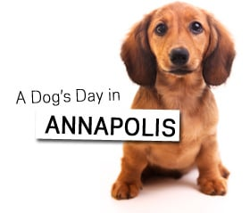 A Dog's Day in Annapolis