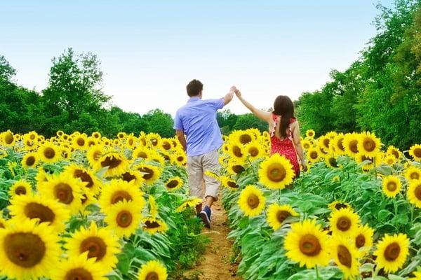 2011-10-4-SunflowerEngagement7