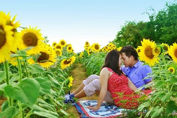2011-10-4-SunflowerEngagement8