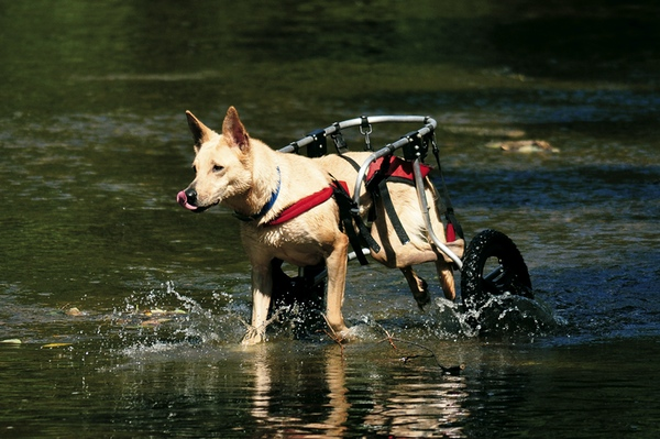 Helping Pets With Disabilities