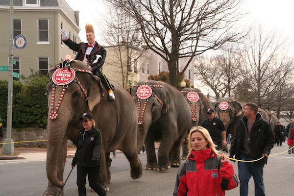 The DC Pachyderm Parade Takes to the Streets Tonight