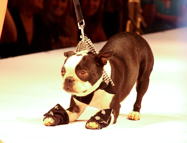 A Night Out: Fashion for Paws