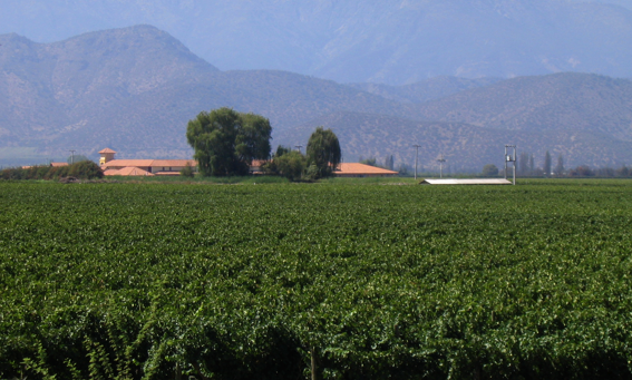 Winery of the Week: Cousiño-Macul