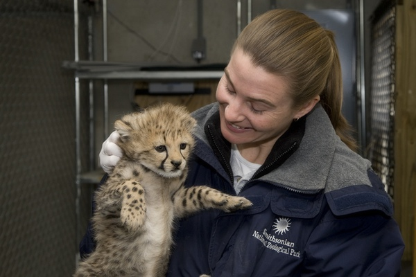 Q&A With Baby Cheetah Biologist Adrienne Crosier