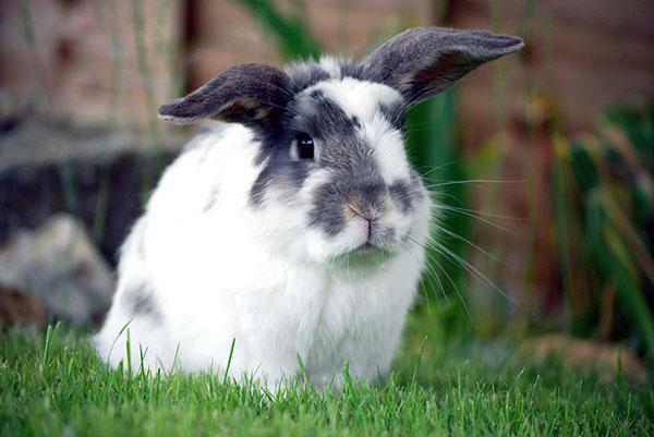 Love Your Pets: Bunny Basics