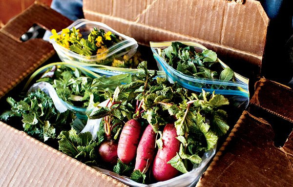 Washington CSAs: How to Pick the Best Farm for You
