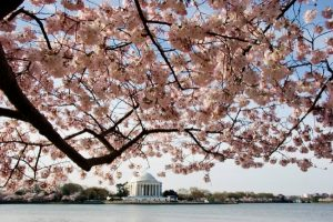 Beyond the Blooms: Activities Near the Tidal Basin