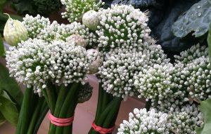 Farmers Market Find: Onion Blossoms