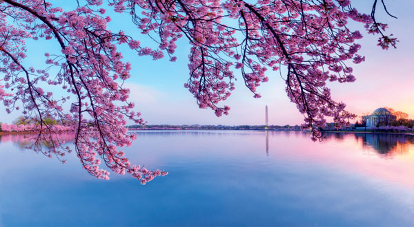 Beautiful Blossoms (Pictures)
