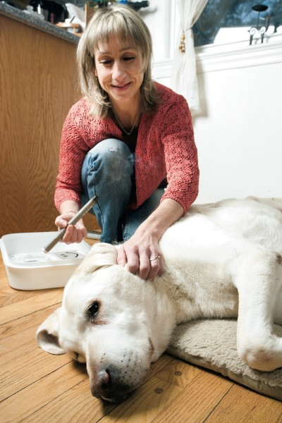 Love Your Pet: Healing Touch