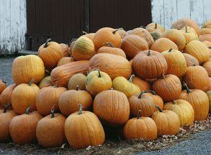 Get Lost—in Corn Mazes, Haunted Houses, and Other Fun Halloween and Fall Activities