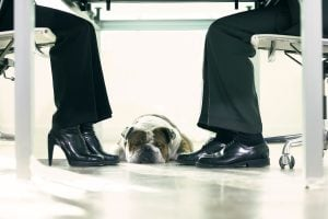 Pets: Who Gets the Dog?