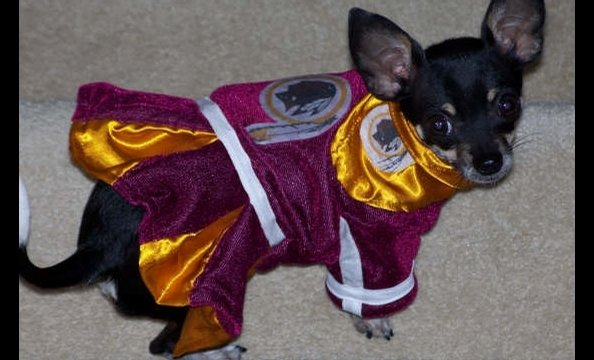 Xena would probably win the award for tiniest Redskins fan—ever.