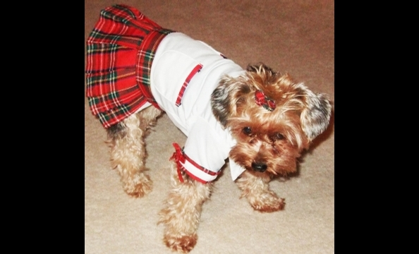 Two-and-a-half year old Jellybean, a Yorkie dressed here as a school girl, loves to get dressed up in any outfit, says her owner.