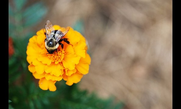 September Photo Contest: Flora & Fauna