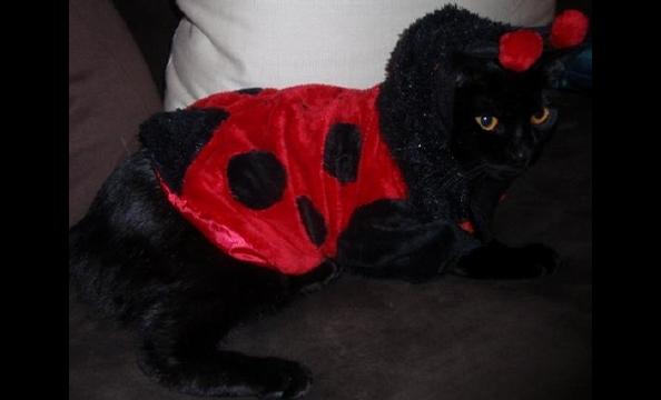 Meet Chloe the ladybug.
