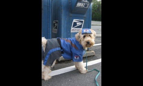 "From the owner: ""After being unsuccessful at catching the mailman, Finnegan has decided to join him and become a mailman himself.  Neither rain, nor sleet, nor snow can keep him from chewing on the mail!"""