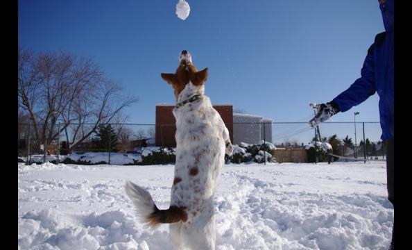 Hero loves the snow.