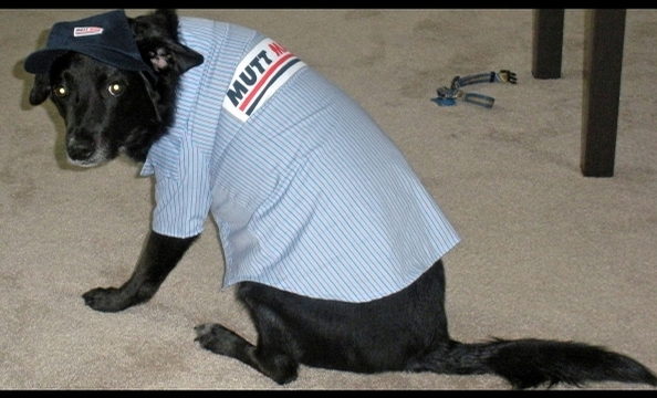 "Writes the owner: ""As an employee of the United States Postal Service, Marlowe thought if he dressed the part, he could tag along to work with me."""