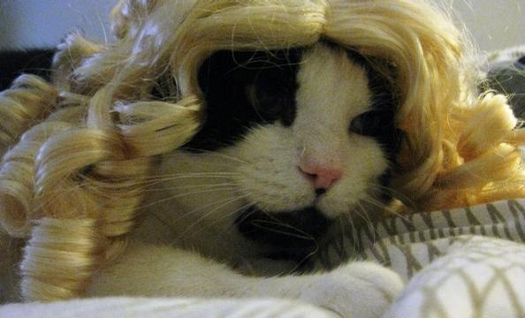 Here's Goldilocks . . . er, Mr. Pink.
