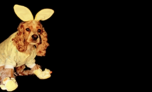 "This is three-year-old cocker spaniel Nigel Sinatra. ""Since he was a puppy,"" says owner Vanessa Palma, ""I nicknamed him Honey-Bunny—hence, the outfit.  Nigel loves to give kisses (especially to gals), eat peanut butter, and go on road trips."""