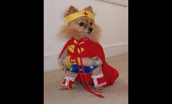 By day, Phoebe is a seven-year-old pomeranian living in Baltimore; by night, she saves the world with her Lasso of Truth.