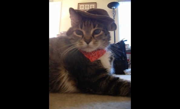 "Howard the fat cat says, ""Howdy, partner."""