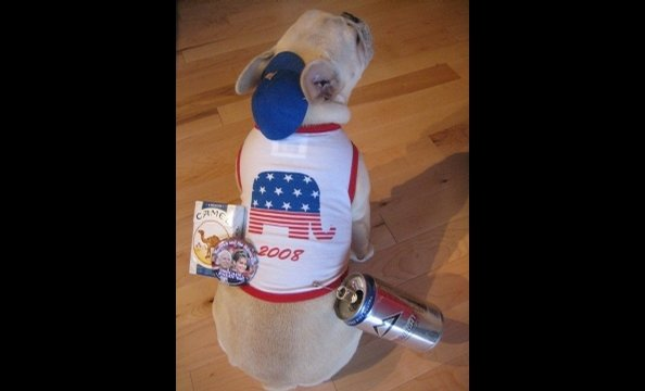 """Determined to renounce her allegiance to France,"" writes the photographer, ""Tchotchke the French bulldog reinvented herself as a 'Freedom' bulldog and celebrated Halloween as Joe Six Pack."" Please note the pack of Camels, can of beer, and patriotic cap—i"