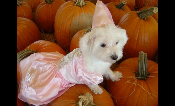 Is she the princess of the pumpkin patch?