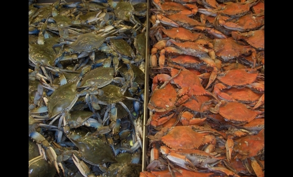 This one was taken at the Riverfront Fish Market.