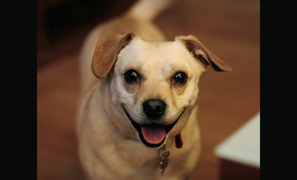 Want to see more smiling pets? Pick up a copy of our February 2010 issue, on stands January 21.
