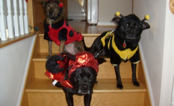 We spot a lady bug and a bumble bee, but what's the pup in the front dressed as? A devil?