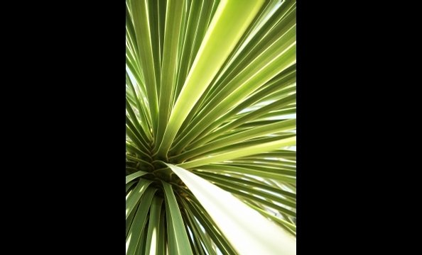 """There are interesting shapes and colors are everywhere you look in nature,"" writes the photographer. We agree. His close-up photo of a palm tree is a case-in-point."
