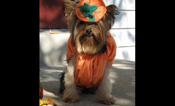 Bree makes for a good pumpkin, no?