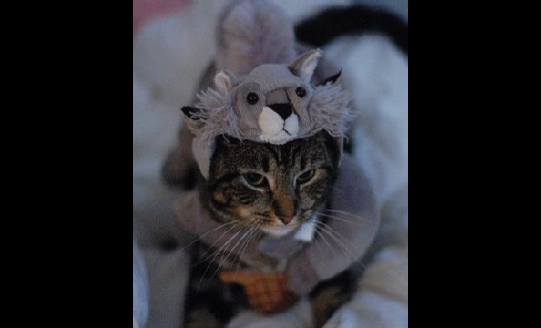 Penny was adopted from the Washington Humane Society a year-and-a-half ago. Her owner, Katie Hughes, says that although her kitty might hate her squirrel costume, Penny loves looking out the window at live ones.