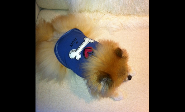 Juciy Couture for Pets