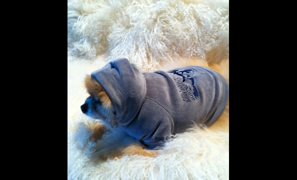 Juicy Couture for Your Pet