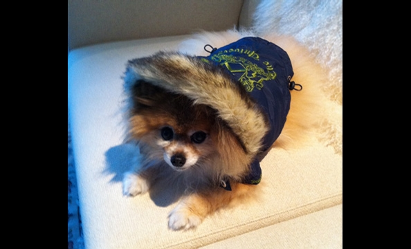 Juicy Couture for Pets