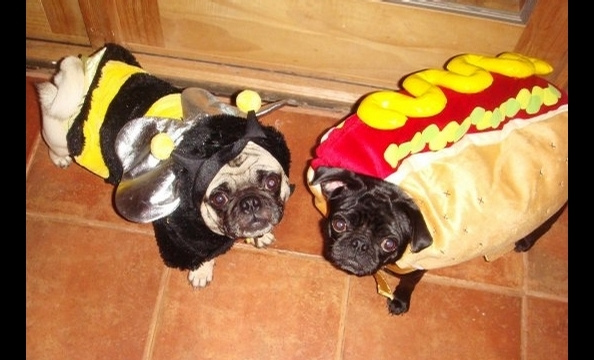 """Chubs and Taters are two of the sweetest dogs you will ever meet,"" writes their owner, Cory Marks, who dressed Chubs as a bee and Taters as a hot dog. Is it wrong that Taters makes us a little hungry?"