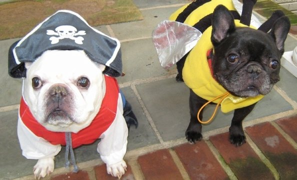 Captain Rocky and first mate Reese-e-bee watch over their kingdom of small ships and big flowers. They are two Frenchie brothers that are always looking for a new adventure.