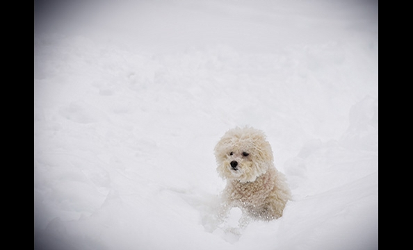 December 2010 Photo Contest: Snowmaggedon