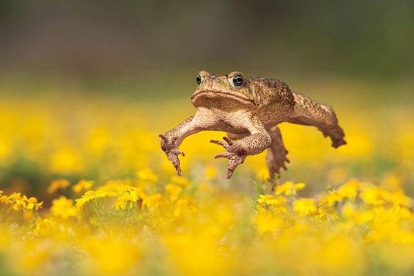 Nature S Best Photography Windland Smith Rice