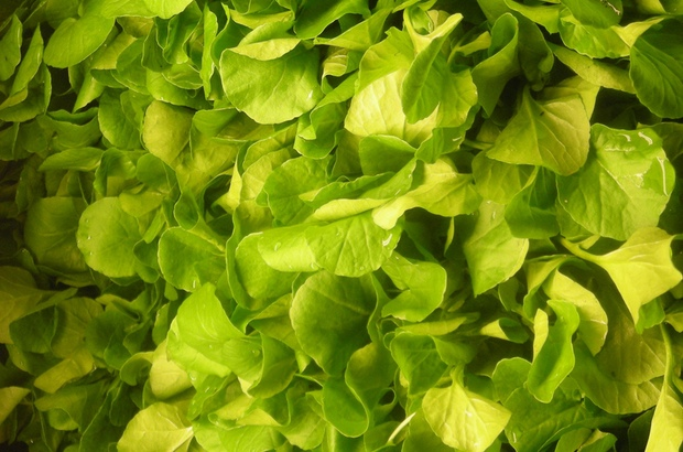 Watercress: The Veggie That Helps Prevent Damage Caused by Workouts