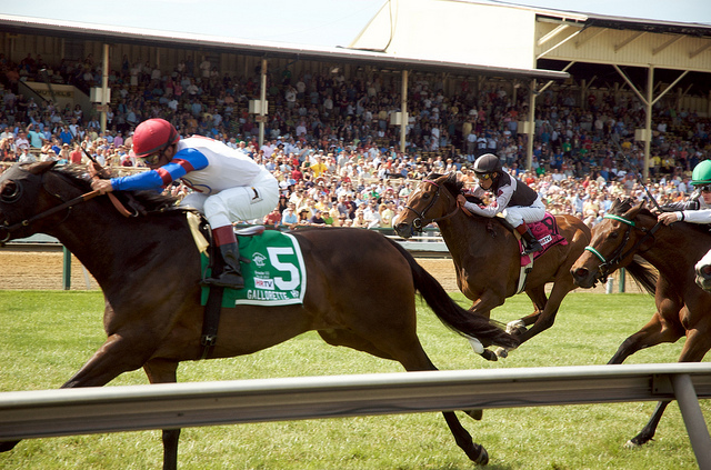Where to Watch the Preakness This Weekend
