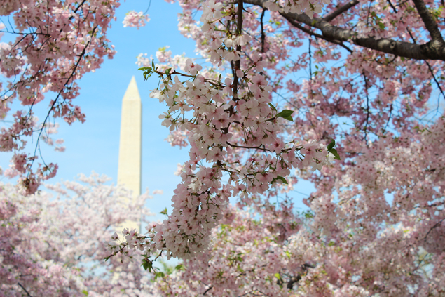 DC Inspired: An Al Fresco Tablescape That Channels the Cherry Blossoms