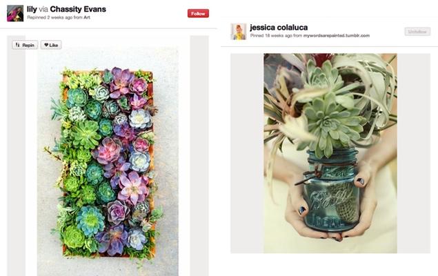 Pinteresting: Succulents