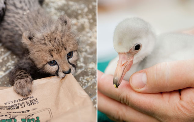 It's an Adorable Baby Animal Baby Boom at the National Zoo (Photos)