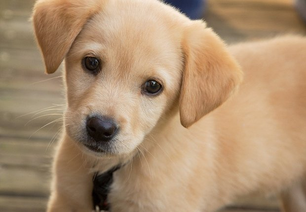 Owning a Dog Can Make Children Healthier