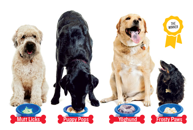 Better Than a Biscuit: Dog-Approved Ice Creams