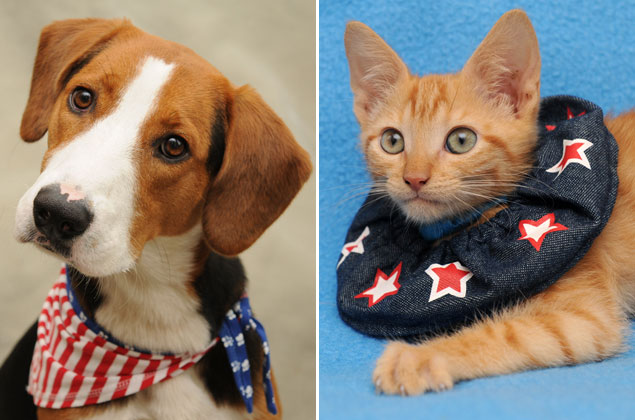 The Cutest Debate Ever, Via the Washington Animal Rescue League